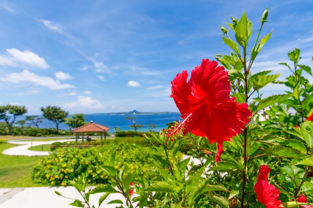 沖縄の薬剤師